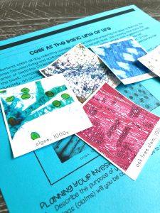Cells Assessment
